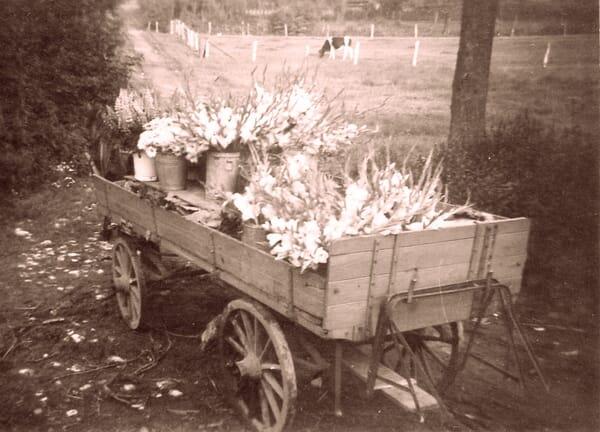 Marktwagen mit Blumen